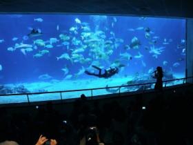 夜宿海生館雙11優惠:白鯨.企鵝.海豹伴入眠!四人成行現折1,111!