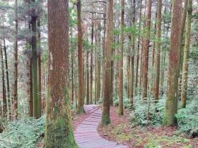 綠林清幽好去處 桃園東眼山國家森林遊樂區 未來搭行動支付再享優惠!