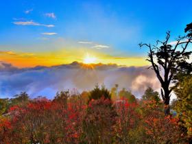 夜探野生動物!大雪山、太平山國家森林遊樂區限定,門票半價、住宿8折、免費導覽優惠開跑!