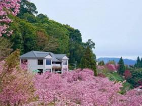 2021 桃園自由行補助申請辦法一次看!入住就省 1000!桃園賞花、自然特色景點有哪些?