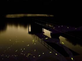 2021 桃園後慈湖賞螢、蝙蝠洞夜間生態觀察免費報名!一訪清幽浪漫湖景 漫步森地