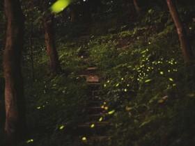 2021台北市螢火蟲季免費參加! 4/12 開始來趟城市郊區賞螢之旅!