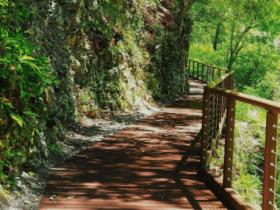 八仙山國家森林遊樂區半票!清幽竹林美景、壯麗溪谷景觀 輕鬆享受森林浴!