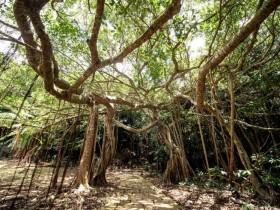 母親節假期,森林遊樂區10元銅板價暢遊國境之南!5月每週假日身分證開頭「2」國家森林遊樂區、森林園區輕鬆入園!