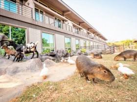 與動物當鄰居!關西六福莊限時第3~4人免費入住、9月升等樓中樓,暑假遊玩即享住房專案價!