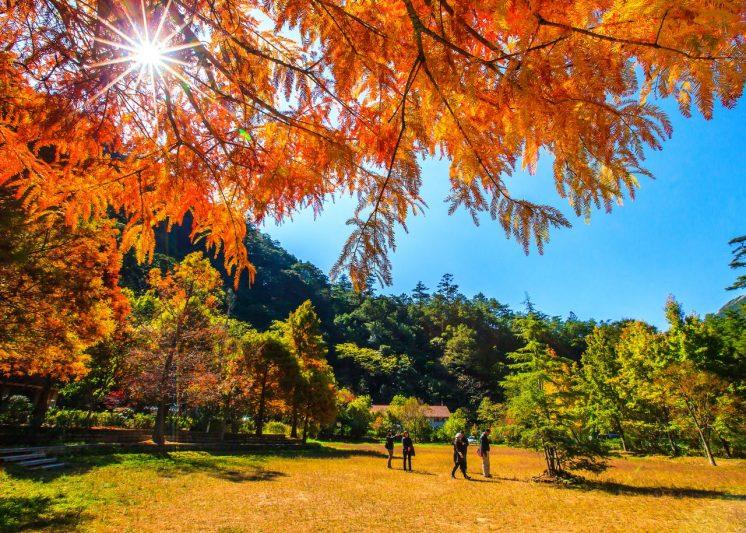 武嶺農場秋季