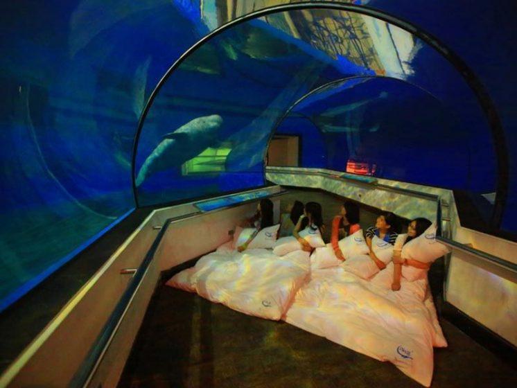 夜宿海生館白鯨