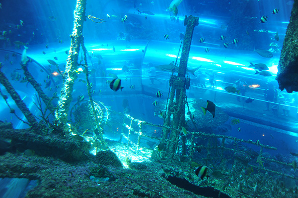 海生館沈船探險