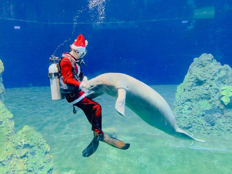 美人魚的耶誕舞伴