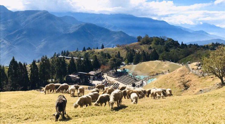 清境農場_山和羊