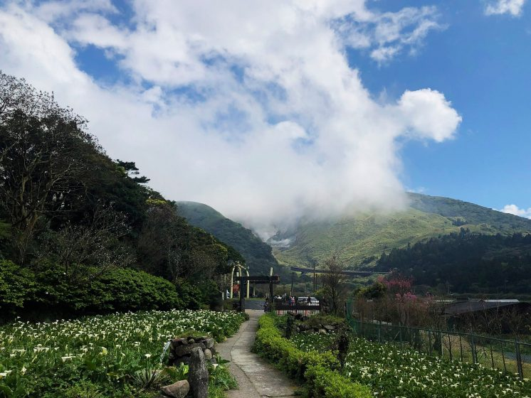 陽明山竹子湖綠山谷海芋園