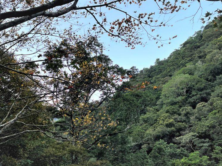 滿月圓青楓林