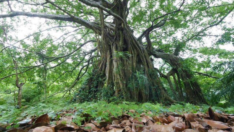 知本國家森林遊樂區