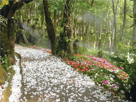 銅鑼鄉:桐花樂活公園