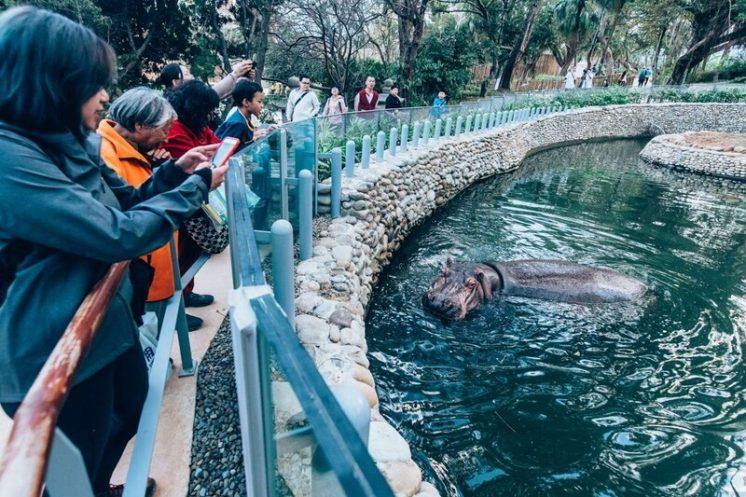 新竹動物園河馬樂樂