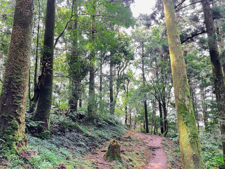 東眼山森林遊樂區
