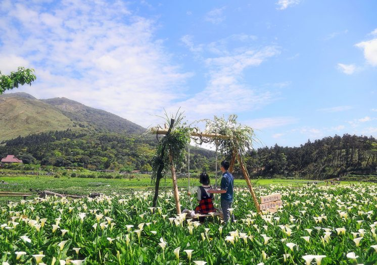名陽匍休閒農莊海芋