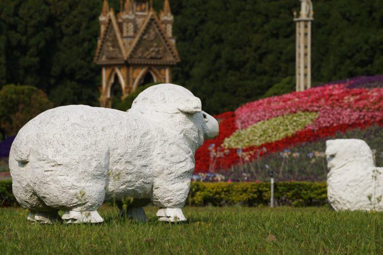 九族薰衣草季綿羊