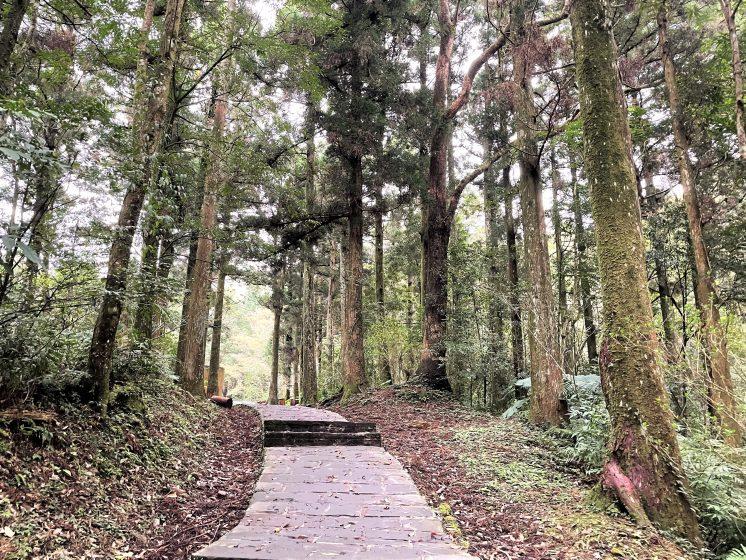 東眼山步道