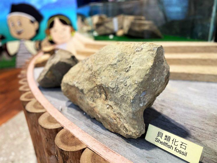 東眼山遊客中心化石
