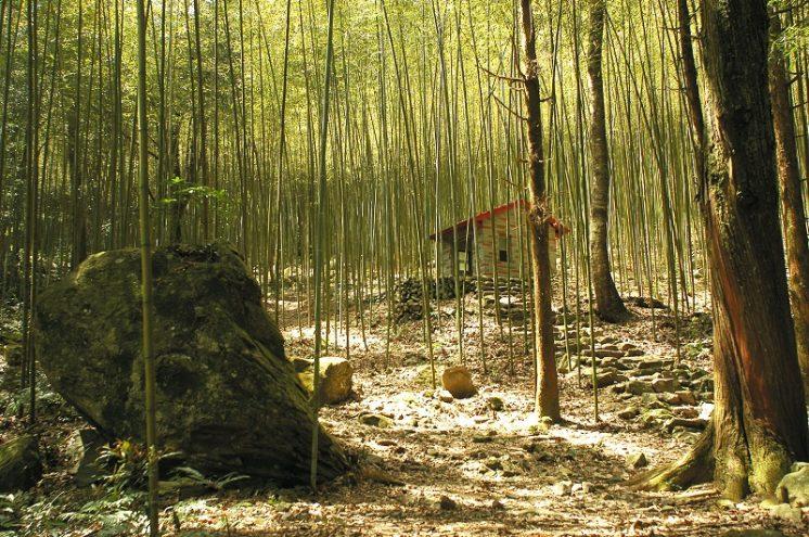 八仙山國家森林遊樂區_竹林步道