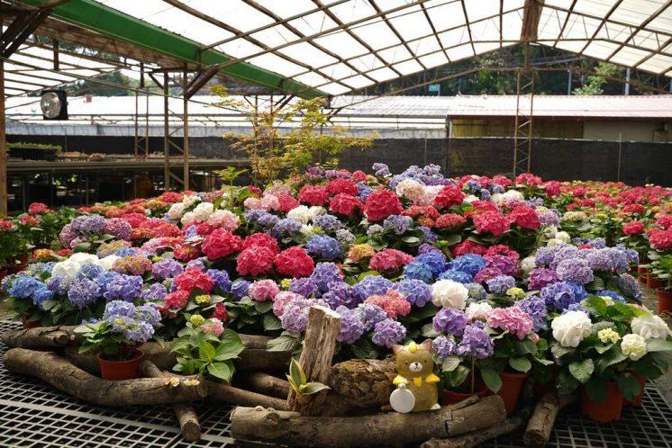 中興花卉農場