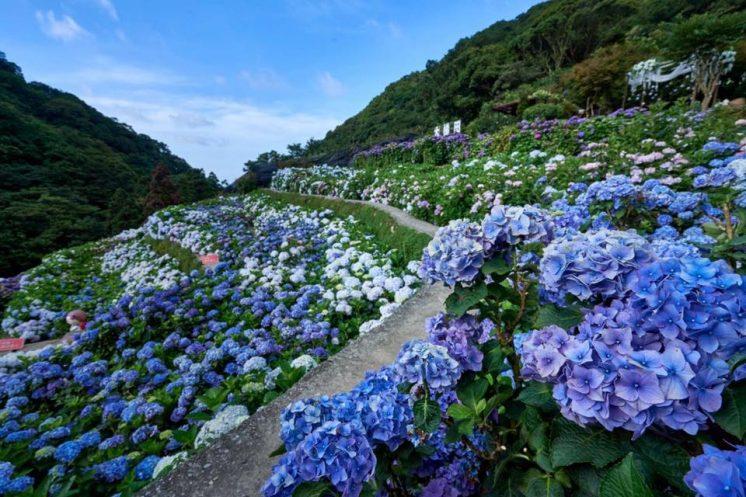 大梯花卉農園