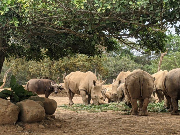 六福村_動物園
