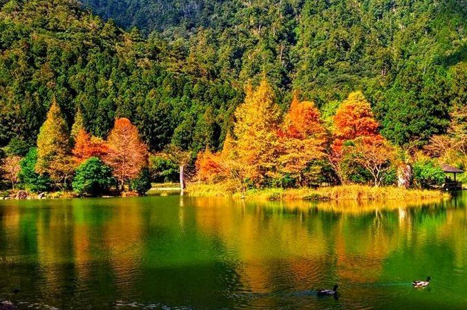 明池國家森林遊樂區賞楓